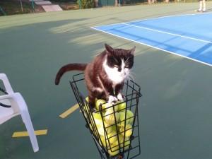 nuovo palleggiatore al tennis_1